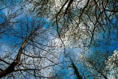 Przyglądający oddolny drzewa w lesie zdjęcia stock