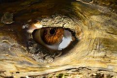 Przyglądający oko od drzewa zdjęcie stock