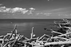 Przyglądający południe przez Atlantyckiego ocean w kierunku horyzontu z driftwood w przedpolu w czarnym & białym, ogień fotografia stock