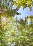 Przyglądający przez drzew up Zdjęcia Stock