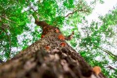 Przyglądający przez pieczarek na barkentynie drzewo w lesie up obraz royalty free