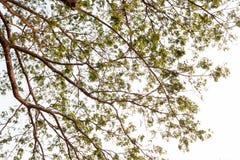 Przyglądający przy drzewem up Obraz Royalty Free
