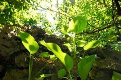 Przyglądający przy drzewem z światłem słonecznym na pięknym naturalnym tle up Zdjęcie Royalty Free