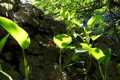 Przyglądający przy drzewem z światłem słonecznym na pięknym naturalnym tle up Zdjęcie Stock