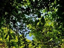 Przyglądający przy drzewem z niebieskim niebem i światłem słonecznym na pięknym naturalnym tle up Fotografia Stock