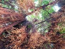Przyglądający przy dużym drzewem up, przestrzeń dla teksta w szablonie Zielony tło Obrazy Royalty Free