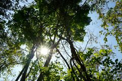 Przyglądający przy dużym drzewem, zielonymi liśćmi, niebieskim niebem i światłem słonecznym na pięknym naturalnym tle up, Obrazy Royalty Free