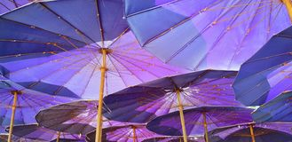 Przyglądający przy fiołkowym parasol up Obraz Royalty Free