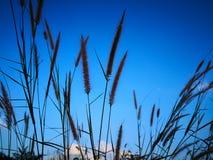 Przyglądający przy niebieskim niebem z obłocznym tłem przez naturalnego up zdjęcia royalty free