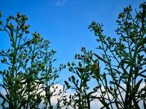 Przyglądający przy niebieskim niebem z obłocznym tłem przez naturalnego up obraz stock