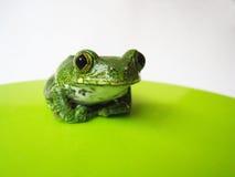 Przyglądający się drzewnej żaby (2) leptopelis vermiculatus Fotografia Royalty Free