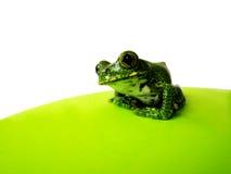 Przyglądający się drzewnej żaby (6) leptopelis vermiculatus Fotografia Royalty Free