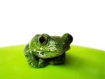 Przyglądający się drzewnej żaby (12) leptopelis vermiculatus Obrazy Royalty Free