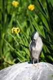 Nieszczęśliwy ptak Zdjęcia Stock