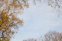 Przyglądający up podczas jesieni Obrazy Royalty Free