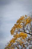 Przyglądający up podczas jesieni Zdjęcie Stock
