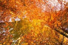 Przyglądający up w drzewa z szerokim kątem Obrazy Royalty Free