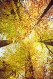 Przyglądający up w drzewa z szerokim kątem Obraz Royalty Free