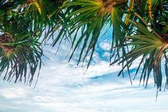 Przyglądający up w drzewku palmowym Zdjęcie Royalty Free