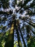 Przyglądający up w drzewnych wierzchołki zdjęcie stock
