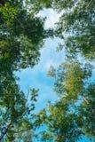 Przyglądający up w Forest Green gałąź natury abstrakcie obraz stock