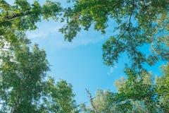 Przyglądający up w Forest Green gałąź natury abstrakcie zdjęcie stock