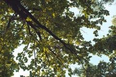 Przyglądający up w Forest Green gałąź natury abstrakcie fotografia stock