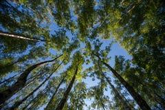 Przyglądający up w Forest Green gałąź natury abstrakcie Zdjęcie Royalty Free