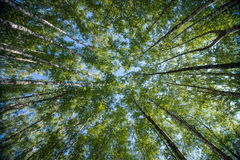 Przyglądający up w Forest Green gałąź natury abstrakcie Fotografia Royalty Free