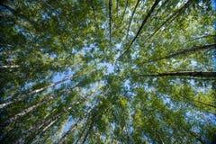 Przyglądający up w Forest Green gałąź natury abstrakcie Zdjęcia Royalty Free