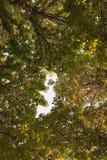 Przyglądający up w Forest Green gałąź natury abstrakta cisawym tle gałąź robią otwór w kształta dziecku Zdjęcie Royalty Free