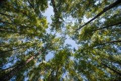 Przyglądający up w Forest Green gałąź natury abstrakta tle Obrazy Stock