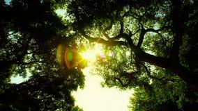 Przyglądający up Zaczarowany Lasowy obiektywu raca zbiory
