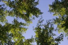 Przyglądający w górę nieba od ziemi przy fotografia stock