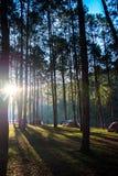Przygoda namiot pod sosnowy lasowy pobliski wodny plenerowym w, Obozować i, sosnowy lasu park, Mae Hon Fotografia Royalty Free
