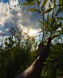 Przygoda w lesie Fotografia Royalty Free