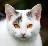 przygody dziecka kot Zdjęcia Royalty Free
