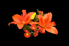 przygotowań kwiatów pomarańczowa czerwień Zdjęcia Stock
