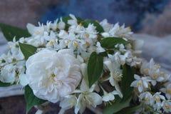 Przygotowania biali kwiaty Obraz Stock