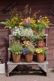 przygotowania kwiaty Zdjęcie Stock