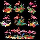 Przygotowania od tropikalnych kwiatów i flamingów Obraz Royalty Free