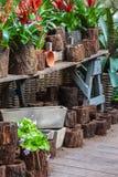 Przygotowania ogrodowe rośliny i narzędzia Fotografia Royalty Free