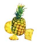 Przygotowania z całego i plasterka ananasem ilustracja wektor