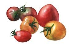 Przygotowania z całym świeżym czerwieni i koloru żółtego pomidorem royalty ilustracja