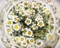 Przygotowania z stokrotką kwitnie w szklanym pucharze, urodzinowy prezent Zdjęcie Stock