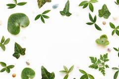 Przygotowania Z zieleń kamieniami I liśćmi Obraz Royalty Free