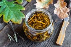 Przygotowanie ziołowy tincture od dąb barkentyny zdjęcia royalty free