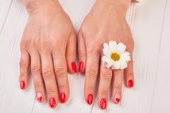 Przygotowywać kobiet ręki z chryzantemą Zdjęcia Stock