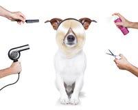 Przygotowywać psa obrazy stock