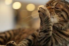 Przygotowywać czasu kota obraz royalty free
